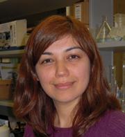 Parisa Asghari